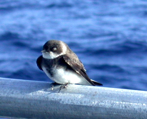 A small bird perched on a railing with blue water visible behind