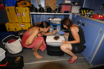 Two researchers examine a reef sample brought up from an ROV survey