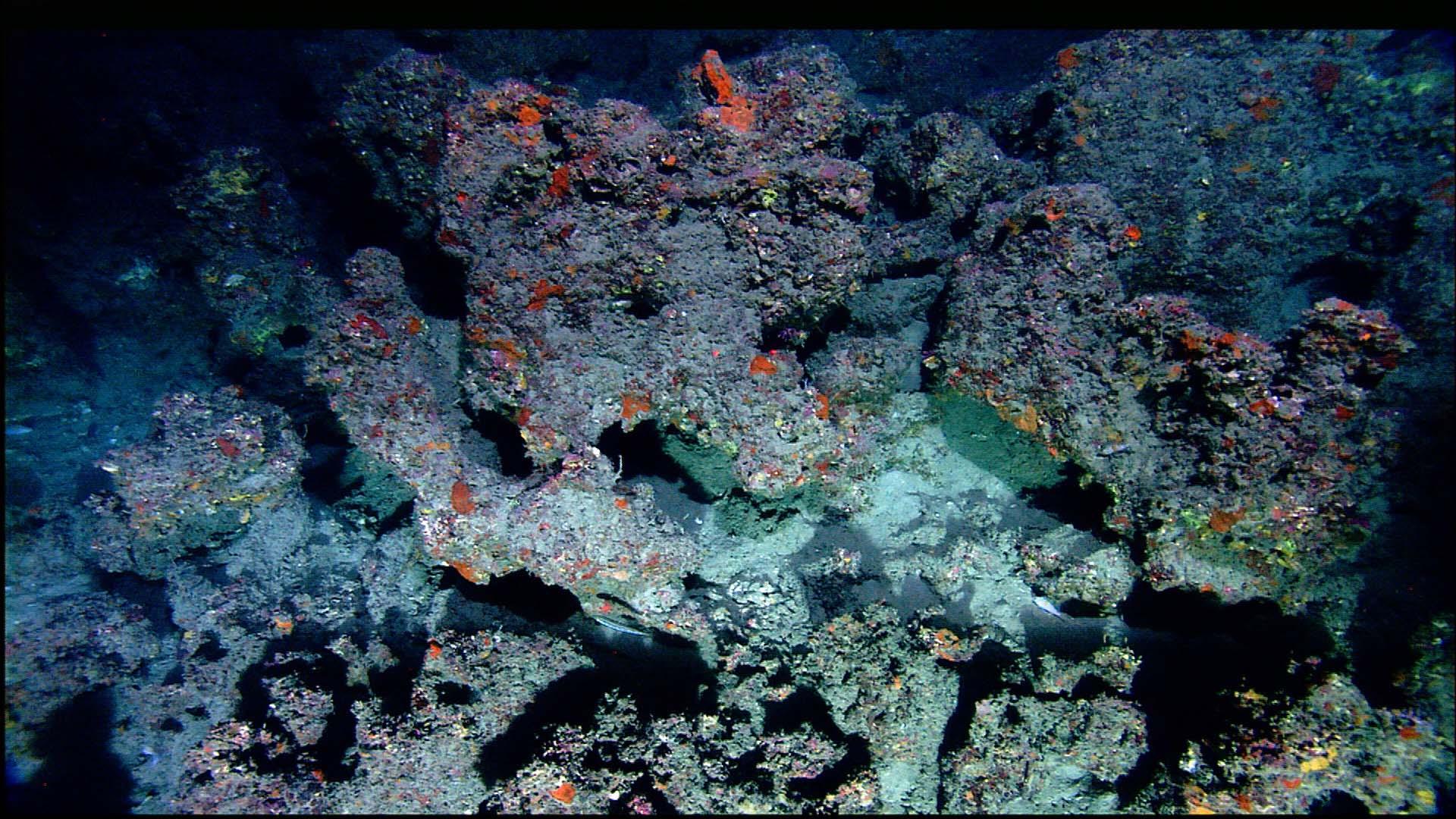 Flower Garden Banks National Marine Sanctuary Secrets of ...