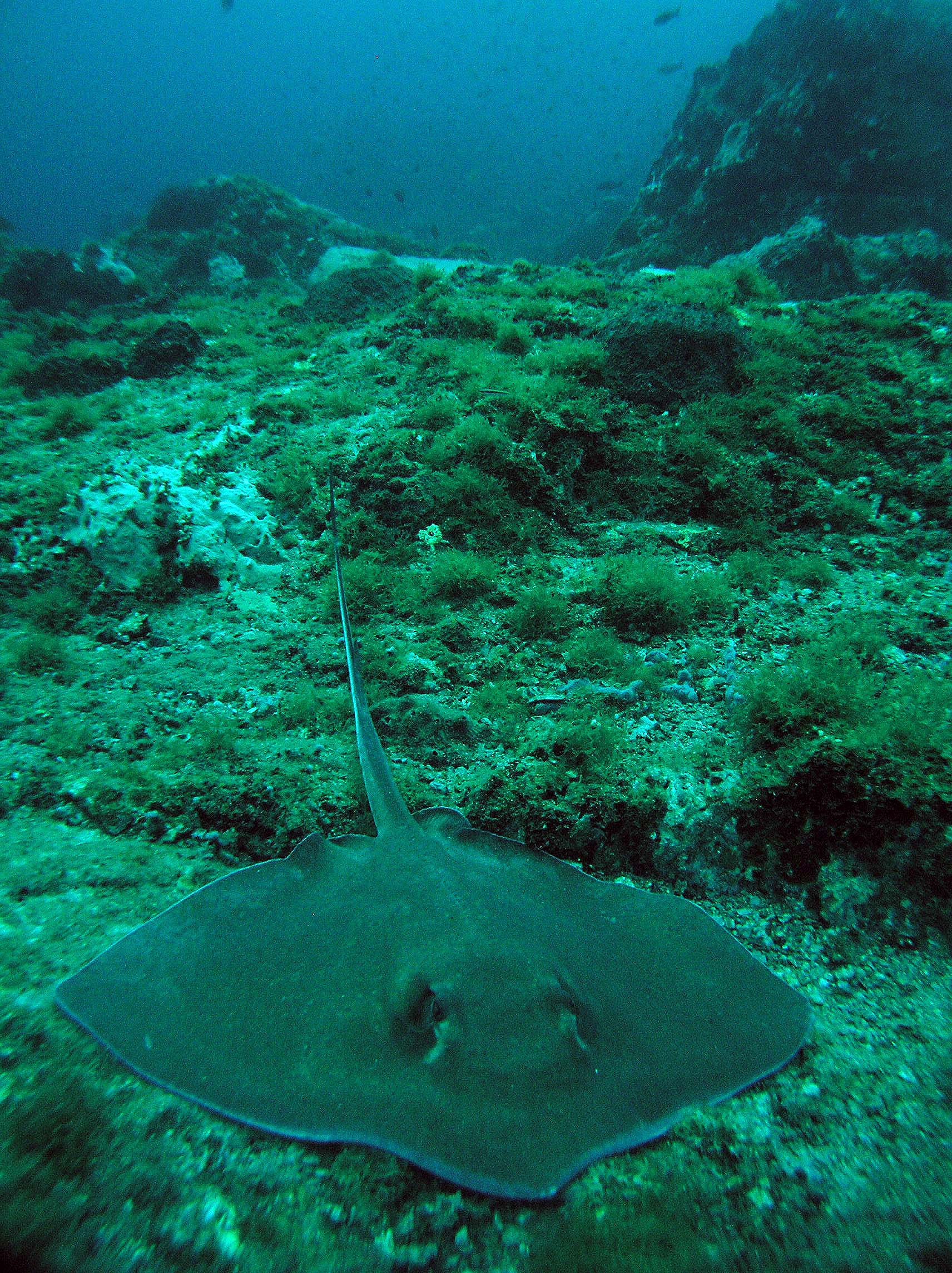 sharks and rays of flower garden banks national marine sanctuary