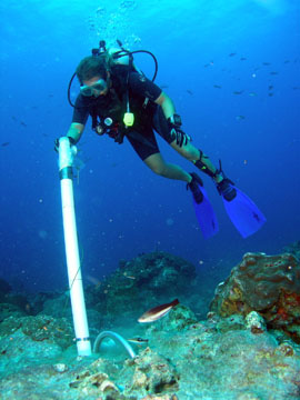 A diver holding a long, white PVC tube in a vertical position over a hole in the sea floor.  Cement flows down the tube into the hole.