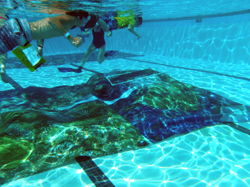 Life size images of the reef, printed on canvas, lying on the bottom of a pool with students snorkeling overhead