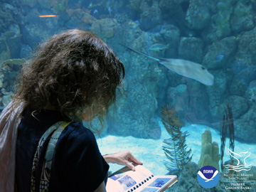Looking over the shoulder of a teacher with a fish ID book standing in front of an aquarium window at Moody Gardens as a stingray swims by