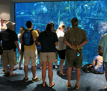 Teachers standing in front of an aquarium viewing panel to practice fish identification