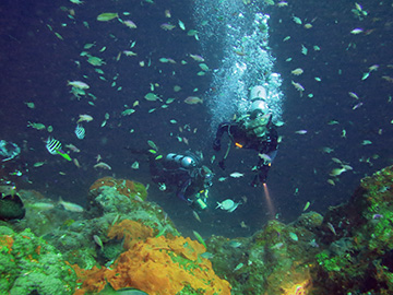 Two divers swimming amid a cloud of fish at Stetson Bank