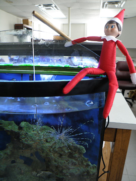 Elf doll holding a fishing pole with the hook dangling into a fish tank housing a small lionfish.