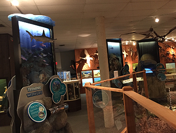 Three exhibit units displayed between glass display cases, dinosaur replicas and mounted waterfowl