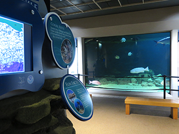 A portion of a video monitor and some exhibit graphics on the left with a view of the nearby aquarium tank to the right. A large grouper is visible in the aquarium.