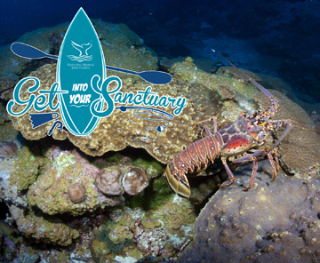 Lobster crawling across the reef. Get Into Your Sanctuary logo in corner.