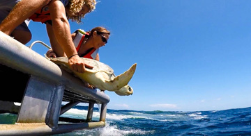 A man and a woman release a sea turtle into the ocean off the back dive platform of a boat