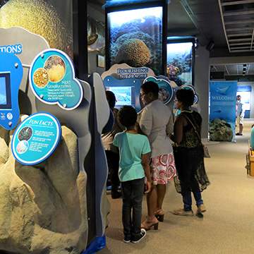 A family of four looking at the Flourishing But Fragile section of the Reef on the Road exhibit