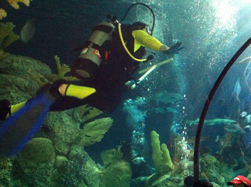 A diver wearing a black and yellow wetsuit in the in the Caribbean exhibit at Moody Gardens