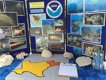 A close up view of a table top display of sanctuary images accompanied by coral skeletons for visitors to touch