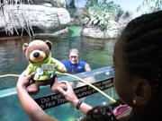 Ed the Bear poses in front of the exhibit while an aquarium worker floats in the water behind him.