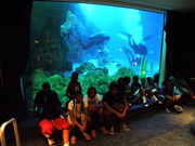 Divers swiming in the aquarium with the rest of the group seated in front of the viewing panel.