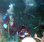 Two student divers as seen from the underwater viewing tunnel in the aquarium exhibit.