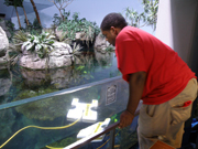 A student looking over the glass panel to watch the ROV in the aquarium exhibit.