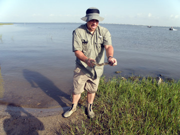 Man holding a snake found in the marsh where he is standing.