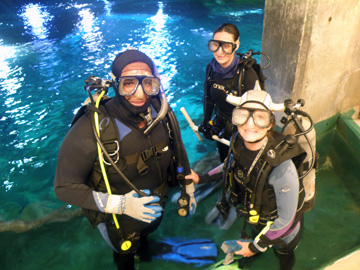 Three divers in full gear standing in the topside entry pool of the Caribbean exhibit at Moody Gardens.