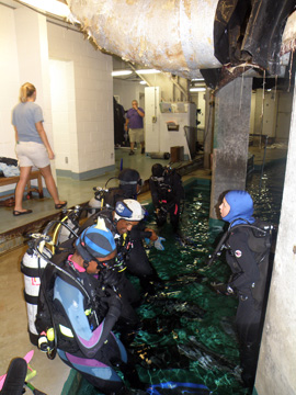 A group of divers in full gear standing in the topside entry pool of the Caribbean exhibit at Moody Gardens.