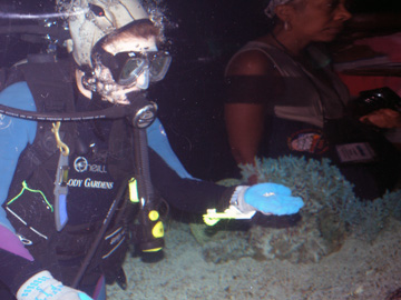 A diver wearing a hammerhead shark-shaped hood and holding out a handful of sharks teeth for aquarium guests to see.