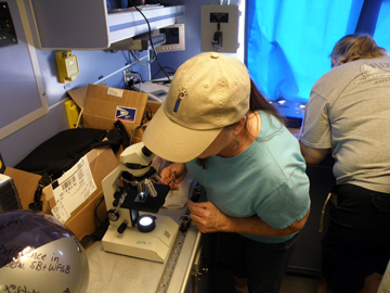 Teachers examining plankton under microscopes on board the R/V Manta
