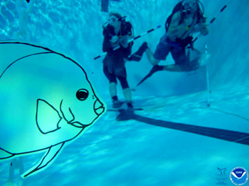 A laminated fish drawing floating underwater in a swimming pool with scuba divers in the background.