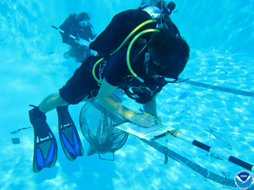 An underwater view of a diver in a swimming pool writing on a clipboard while floating above the bottom. Another diver is visible in the background.