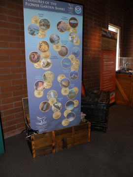 Display banner showing the treasures of Flower Garden Banks Naitonal Marine Sanctuary as coins falling into a treasure chest.