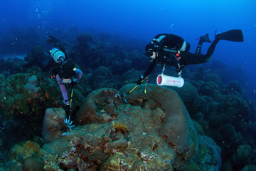 Two divers capturing lionfish on the reef