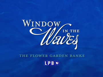 Title screen from Window in the Waves documentary