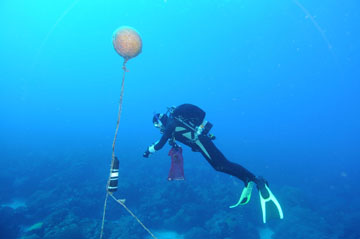 Cylinder attached to a line suspended from a buoy.  A scuba diver is floating to the right of the line and reaching toward the cylinder.