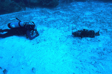 A scuba diver lying on an open sand patch facing to the right.  Facing the diver and also lying in the sand patch is a large fish.