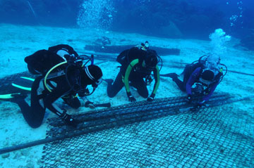 Three divers kneeling in a sand flat, rolling up metal pipes in a section of chain link fence.