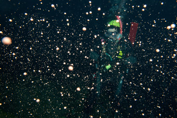 "A ""snowstorm"" of white pellets is suspended in the water in front of a scuba diver at night."