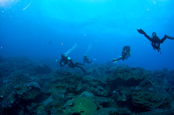 Four divers swimming over the reef at about 100 foot depth.  A research pin is just visible protruding from the reef in the center of the photo.