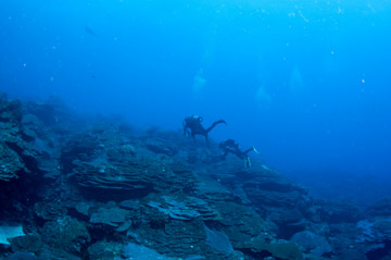 Two divers swim up a reef that slopes up to the left.