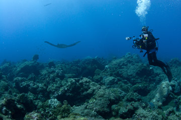 A diver with full camera gear hovers above the reef to the right as a manta ray swims off into the distance on the left.