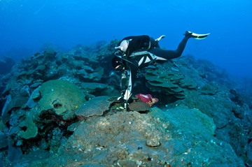 A diver attaching a new tag to a metal pin embedded in the reef.