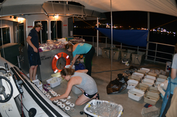 Researchers organizing containers of live coral fragments on the top deck of R/V MANTA