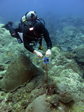 Diver attaching an object to the top of a metal rsearch pin embedded in the reef.