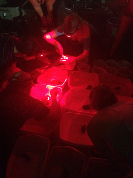 Researchers watching coral fragments at night using red lights