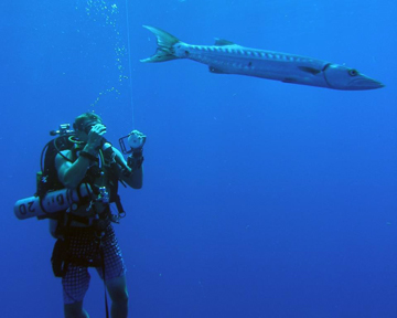 A diver holding a marker buoy line while floating underwater with a barracuda.