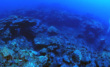 A massive coral reef habitat stretching into the blue distance.