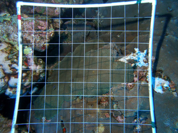 A quadrat lying across a section of reef.  The quadrat is a square made of PVC pipe with strings stretched across to create a grid pattern.