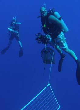 Two divers carrying extra air and other equipment to help the technical divers.