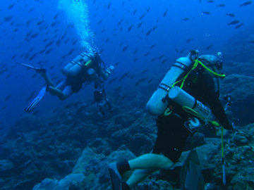 Technical divers ascending from deeper reefs within the sanctuary