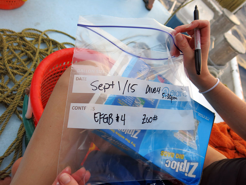 A Ziploc bag labeled with Sept 1/15, Dive 4, 5:30 pm, EFGB #4, Zoo#