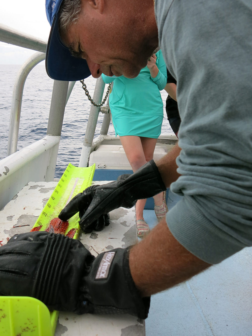 A man wearing puncture proof gloves measuring a lionfish on a fish board