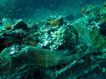 A piece of shrimping net draped across the reef.